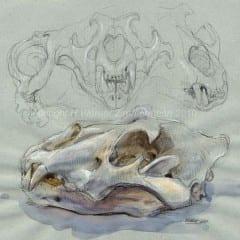Lion-skull-multiple-views_Halina
